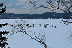 Entre les branches / Between the branches (1-2) (deplour) Tags: ice river fishing branches rivire glace pche smelt restigouche perlans