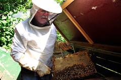Bienenvolk (Kurt Gritzan) Tags: park germany deutschland nikon natur blumen nrw blume landschaft wald garten gelsenkirchen nordrheinwestfalen umwelt bienen honig imker honigbiene apismellifera apidae bienenstock bienenvolk carnica nikond5000 bienenvölker