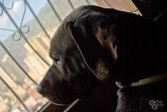 Mayla (Star_Ligth) Tags: dog window ventana view caracas mascota avila perrita mestiza starlight mayla starligth