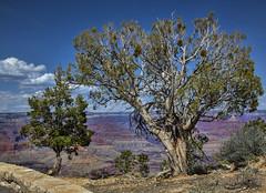 Trees and views (Deb Felmey) Tags: park colors landscape nationalpark amazing grandcanyon grand canyon