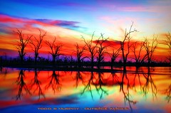 DSC_1285_6_7a (Outback Images1) Tags: trees sunset sky lake colour art robert broken nature water sunrise spectacular dead twilight nikon photographer spectrum natural dusk awesome hill explosion images most outback once todd 18 murphy photographics lifetime menindee 200vr pamamaroo d300s
