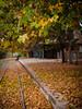 se va el otoño (.el Ryan.) Tags: portrait argentina dof paisaje colores amarillo mendoza otoño tamron lente lujan chacrasdecoria lujandecuyo mauricioryan