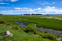 Wetland (Victor Liu ) Tags: landscape 7d yellowstone wyoming grassland wetland