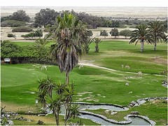 Rossmund Golf resort @ Swakopmund, NAMIBIA (act.marketing) Tags: flowers plant tree history tourism argentina beauty gardens photo model dubai desert outdoor soccer border parks kingdom safari arab saudi arabia bloom hotels mauritius dates riyadh wadi ibn  najd saud                                 1818
