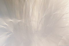 Fiber Optics (Jim Corwin's PhotoStream) Tags: red sunlight abstract motion blur lamp thread horizontal closeup modern digital outdoors photography pattern glow technology shadows patterns internet illumination nobody cable science highlights communication equipment cables electricity wireless access glowing network complexity backlit hightech innovation ecommerce bundle closeups ideas connectivity luminous futuristic fiberoptics lighteffects interaction bandwidth flexibility lighteffect selectivefocus electricalcord accessibility sidelit lightstudy computernetwork computertechnology photographicstudy datacable datatransfer fiberopticlamp electronicsindustry usetosenddata bundleoffiberoptics
