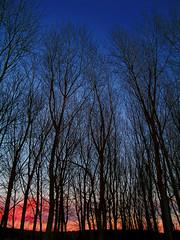 Contranoche (_Zahira_) Tags: trees sunset sky backlight night contraluz lafotodelasemana atardecer noche árboles arboles olympus bosque cielo ruidera ramas ngr e500 uro lagunasderuidera ltytr1
