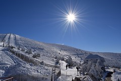 Sun Star (Navacerrada-Madrid). (M Roa) Tags: flickrbronzetrophygroup