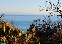 CactusCoastII (mcshots) Tags: ocean california travel winter sea cactus usa beach nature water coast stock canyon socal pricklypear mcshots topanga swells losangelescounty