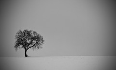 Spring will come (VB31Photo) Tags: winter white snow black france cold tree nature landscape spring solitude noir hiver minimal lonely neige minimalism midi garonne blanc printemps froid solitaire haute pyrnes lonelyness midipyrnes supervincent31 vb31photo