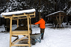 Wildfütterung (Forstbetrieb_Fichtelberg) Tags: schnee wild bayern wald bäume baum fütterung wildfütterung fichtelberg forstbetrieb baysf bayerischestaatsforsten