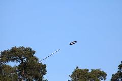 La Hulpe - Prenez l air (1) (Patrick Williot) Tags: la air fete chateau brabant domaine cerfs volants wallon solvay hulpe