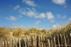 in-het-land-der-blonde-duinen-en-niet-heel-ver-van-de-zee (Don Pedro de Carrion de los Condes !) Tags: open noordzee wolken duinen helm landschap zand donpedro kust paaltjes impressie toerisme duinpad kustlijn helmgras piggelmee d700 beplanting glooiend
