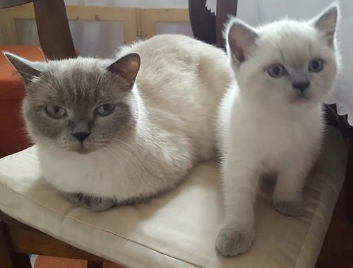 Gorden und seine Mama, warten aufs Frühstück 😊