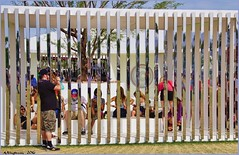 Looking In (AJVaughn.com) Tags: california new 2 people music favorite 3 sahara public field wheel sport alan aj this james louis photo dance search flickr day child you outdoor weekend c crowd s ferris tags beta any palm safety add f springs level page empire only coachella info safe member underworld vaughn viewing polo edm gobi feedback commenting comment additional indio provide mohave 2016 dolab ajv ajvaughncom alanjv haelos