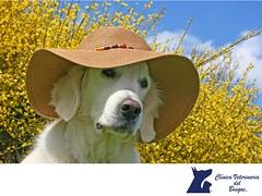 Como le afecta el sol a mi mascota. CLINICA VETERINARIA DEL BOSQUE 3 (tipsparamascotas) Tags: mascotas veterinaria delbosque estticacanina cuidadodemascotas mascotassaludables veterinariadelbosqueveterinariacuidadodemascotasmascotassaludablesesteticacaninaclinicaveterinariadelbosqueespecialistasencuidadodemascotaswwwveterinariadelbosquecomveterinariadelbosque