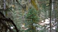 waterfall.mist1 (rana.way) Tags: mist moss lichen johnstoncanyon treelichen lichenforest