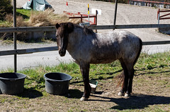Byrsta_cleanout_started_2016-05-05_36 (Viktor Karppinen) Tags: country 2016 hourse byrsta helmishouse cleanoutstarted