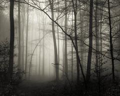 * (sedregh (on/off)) Tags: mist fog forest landscape nebel eifel landschaft wald sonyrx100
