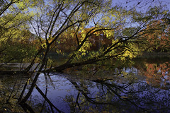 Baptized (Howard L.) Tags: autumn trees sunset reflection leaves oaklandlake foliages canonef2470mmf28liiusm canoneos5dmarkiii