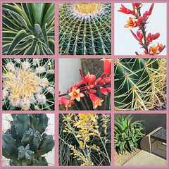 Desert Plants on Purpose (cobalt123) Tags: arizona cactus plants nature phoenix set desert tiles urbannature series agave yucca barrelcactus desertplants redyucca landscapeplants yellowyucca varigatedagave