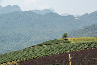 sapa - vietnam 13