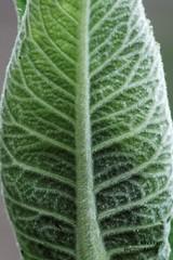 Leaf 2 (gorrarroja) Tags: espaa flower macro valencia spain flor macrophotography macrofotografa