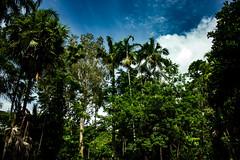 George Brown Darwin Botanic Gardens (betadecay2000) Tags: plants brown rain gardens george day outdoor pflanze pflanzen australia darwin rainy botanic australien february northern bume garten baum regen februar territory palmen 2014 botanischer botanisch