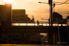 Inokashira-Dori Avenue in evening () (christinayan01) Tags: silhouette japan tokyo evening footbridge yoyogi avenue