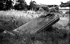 Alberton Cemetery, B+W 1970ss- sheet 165 04 (Graeme Butler) Tags: landscape heritage graves cemeteries victoria australia