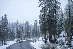 The High Sierra (shaunezell) Tags: snowflake winter mountain snow storm mountains tree ice weather dark landscape drive spring 4x4 sony atmosphere adventure mammoth toyota sierranevada sonya7