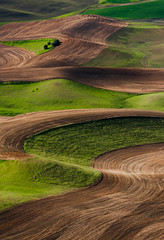 Steptoe Swirls (EdBob) Tags: farm farmland farming plow plowed steptoe steptoebutte steptoebuttestatepark rural country countryside pattern nature green red abstract washington washingtonstate easternwashington wheat sunset agriculture agricultural americanwest palouse pacificnorthwest edmundlowephotography edmundlowe travel destination allmyphotographsare©copyrightedandallrightsreservednoneofthesephotosmaybereproducedandorusedinanyformofpublicationprintortheinternetwithoutmywrittenpermission wwwedmundlowephotocom