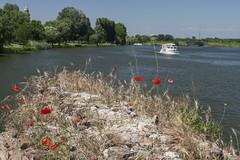 Lago Inferiore (Wendy:) Tags: red lake boat mantova poppies mantua lombardy lagoinferiore