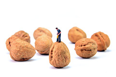 Project 366 - 7/7/2016 - 189/366 (cathy.scola) Tags: miniatures nuts walnuts ho littlepeople onwhite odc hofigures project365 project366 littleperspectives