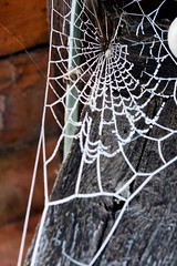 (allanimal) Tags: snow weather frost spiderweb things stockcategories afszoomnikkor2470mmf28ged