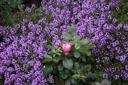 IMG_2575 Garden flowers at Brakanes Hotel