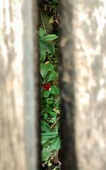 embaixo da ponte (Ju Leal) Tags: park parque brazil plant flower detail verde green planta leave folhas nature brasil garden saopaulo sãopaulo natureza flor sp jardim jardimbotanico botanicalgarden redflower detalhe florvermelha mobgraphia mobgrafia
