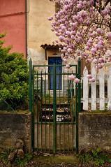 Welcome (Lord Markus) Tags: magnolia gate cancello door porta abandoned house casa abbandonata spring primavera langhe italia italy piemonte asti montafia bagnasco blossoms pink flowers wall muro rust abbandono abandonment decay nikon d300s sigma 1020