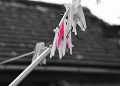 Pink Peg (Darren Tolley) Tags: peg kidderminster