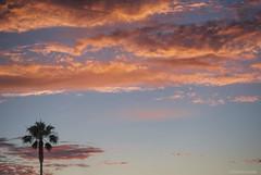 Perspective.... (Joe Hengel) Tags: california ca pink sunset red sky orange clouds evening skies glow outdoor palm palmtrees socal palmtree southerncalifornia orangecounty oc goldenhour lagunabeach eveninglight goldenstate eveningskies cloudsbluesky cloudsstormssunsetssunrises cloudsorangecounty