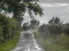 CrowInMist (Tony Tooth) Tags: mist bird wet nikon farm buckinghamshire lane crow nikkor hdr hillesden d7100 55300mm