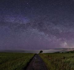 // Pave The Way (wetography) Tags: sky mist tree fog night canon way stars sony astro astrophotography milky scapes 6d astrometrydotnet:status=failed astrometrydotnet:id=nova1627360
