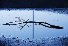 Kvllsro (Bettysbilder) Tags: water outdoors serene vatten utomhus spegling lugn vattenpl