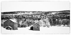 Berkshire Farm in Black And White (Geoffrey Coelho Photography) Tags: old winter blackandwhite bw snow barn forest landscape farm framed hill barns hills nostalgia frame nostalgic highkey oldfashioned greatbarrington massachsuetts nerwngland