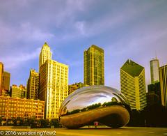 Chicago2016CloudGateMorning-472 (wanderingYew2) Tags: sculpture chicago reflection 120 mamiya film mediumformat illinois downtown milleniumpark publicart cloudgate filmscan mamiya7ii