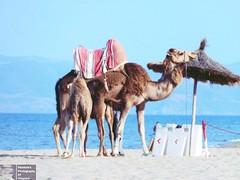 DSCN5674-2 (Pendore) Tags: holidays vacances plage mer maroc marocco