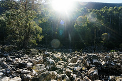 20160627-18-Scree field on Wellington Falls track (Roger T Wong) Tags: outdoors rocks walk australia hike scree tasmania hobart mtwellington bushwalk tramp 2016 wellingtonpark dolerite disappearingtarn sony2470 rogertwong sel2470z sonyfe2470mmf4zaosscarlzeissvariotessart sonya7ii sonyilce7m2 sonyalpha7ii