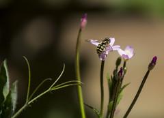 Garden Scene (vernhagl) Tags: flowers closeup garden insect stillife moodylighting
