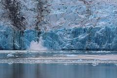 Dawes Glacier Calving (Robert Borden) Tags: blue ice nature wet water alaska glacier pacificnorthwest iceberg splash calving dawesglacier endicottarm