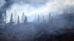 Wildfire in Northwest Calgary (5of7) Tags: calgary alberta urban grass fire landscape smoke scape trees fav edworthypark pregamewinner pregamechallenges challengewinner 2013 canon powershot sx50 serene pity great capture 10fav andromeda50bestofthebest 11fav nature outdoor gamewinner gamesweepwinner sweep perpetualchallenge 4wins