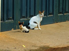 i've met a lil' stranger (esavitri) Tags: pet cat kitten kucing binatang